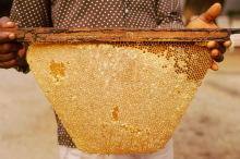 Viel Honig - viel Wachs aus dem Korb, 1987