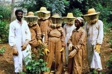 Die Imker in Boabeng-Fiema, 1986