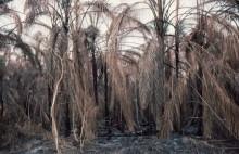 Buschfeuer in Ghana im März 1983