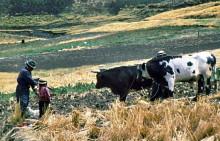 Ackerbau in 4000 m Höhe