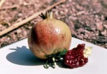 Granatapfel auf Paros