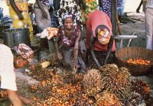 Mit den TWIGA Frauen und ihrer Ölpalmennussernte