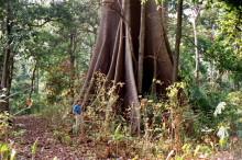 Im Wald bei Boabeng-Fiema