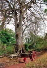 Im Wald, März 1986