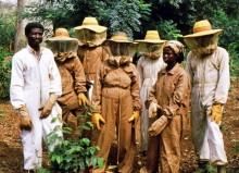 Die Imker in ihrer Schutzkleidung in Boabeng-Fiema
