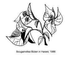 Bougainvilleas in Eikes Garten, 1986
