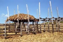 Maisspeicher im Agricultural Training Centre, Chitepo