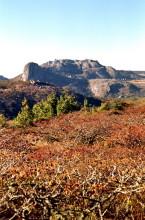 Msasa Woodland im High Veld