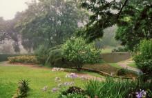 Im Botanischen Garten, Vumba