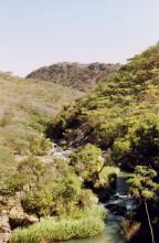 Am Inyangombi Fluss, 18.7.1990