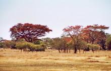 Landschaft bei Malwatte
