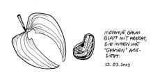 Mopane Baum Blatt und Frucht bei Palmwag, 13.3.