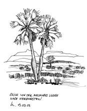 Makalani Palmen bei der Palmwag Lodge, 13.3.