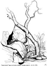 """Ein """"Kanniedood"""" Baum bei Auros, 23.6.1992"""