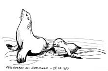 Robbenmama mit Baby, Kreuzkap, 15.4.1993