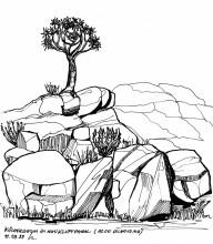 Köcherbaum in der Naukluft, 11.9.1999