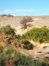 Rietfontein auf Wüstenquell, 16.11.03