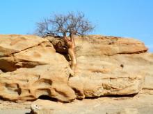 Kanniedood Baum im Felsen auf Wüstenquell, 16.11.03