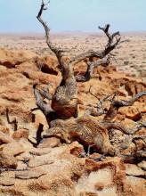 Skulpturen der Natur auf Wüstenquell, 17.11.03