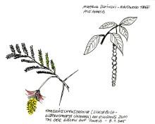 Flora auf Ameib, 8.1.05