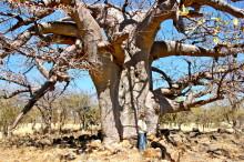 Bei den Baobabs, 19.07.