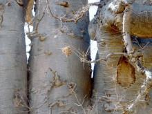 Teile vom Baobab, 19.07.