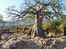 Kunene Baobab, 20.07.