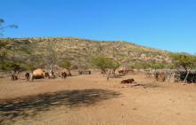 Ein Himba Hof, 21.07.
