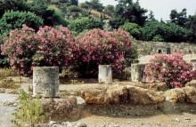 Oleanderzeit in der römische Agora, 8.9.1992