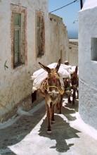 Muli Transport in Mesa Gonia, 18.6.