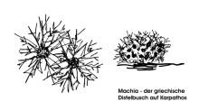 Machia Büsche, 12.6.