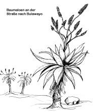 Baumaloen an der Straße vor Bulawayo, 1984