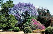 Im Stadtpark von Bulawayo