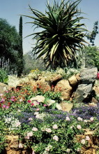 Im Stadtpark von Bulawayo, September 1984