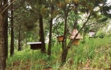 Bienenkörbe in Genforest, 1988