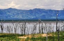Baumstrünke im Wasser