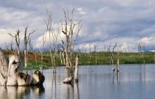 Bootsfahrt durch abgestorbene Bäume