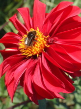 Letzter Bienenbesuch