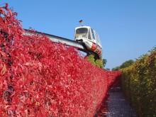 Rote Blätterwand