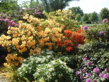 Der Rhododendrongarten
