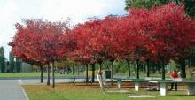 Tischtennis unter herbstlichen Bäumen