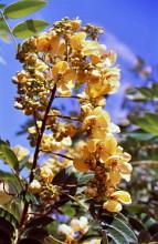 Blütenpracht, Bumi Hills