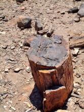 Versteinerter Wald bei Gai-As