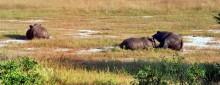 Nashörner im Hwange Park