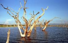 Abgestorbene Baumkronen im See