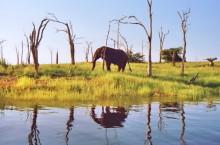 Elefantenspiegelung