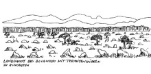 Jede Menge Termitenhügel