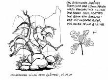 Commiphora wildii in den Twyfelfontei Felsen, 2001