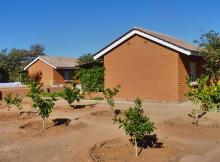 Obstbäume in der damara Mopane Lodge, 2011