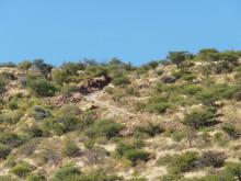 Die letzte steile Kehre nach oben zur Grootberg Lodge